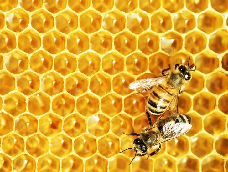 Arıların Kimyası