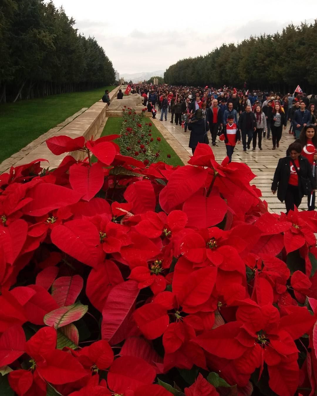 Güzeller Güzeli Bir Çiçek: Atatürk Çiçeği